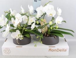 plantes fleuries_1