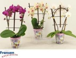 plantes fleuries_2