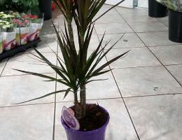 plantes vertes_2